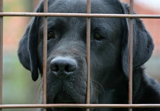 How a Prisoner's Dilemma Explains the Power of Customer Service | Dog Behind Bars
